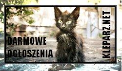 psy i koty darmowe ogłoszenia, zwierzęta szukają pomocy