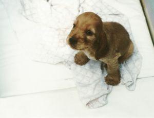 Wychowywanie psa – konsekwencja