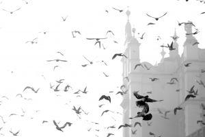 Krakowskie Legendy :: O krakowskich gołębiach