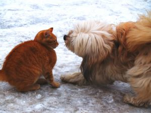 465036_cat_vs_dog[1]