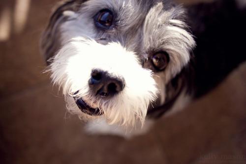 Psy mogą pomagać w leczeniu chorób paznokci u ludzi – wskazuje badanie UE