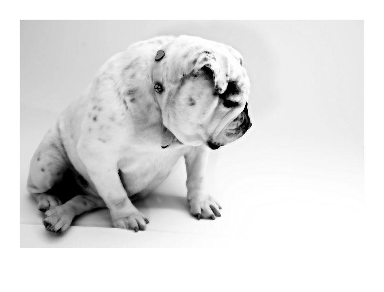 Psia moda – Wśród ubranek dla zwierząt dominują bluzy dresowe, kurtki przeciwdeszczowe oraz poncza